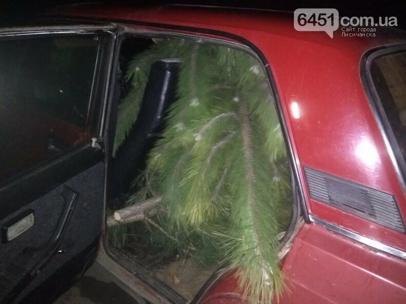 В Луганской области задержали преступников за незаконную вырубку леса, фото-4