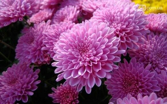 Прогноз по ценам на цветы: какая стоимость цветов в Лисичанске в преддверии праздника, фото-4