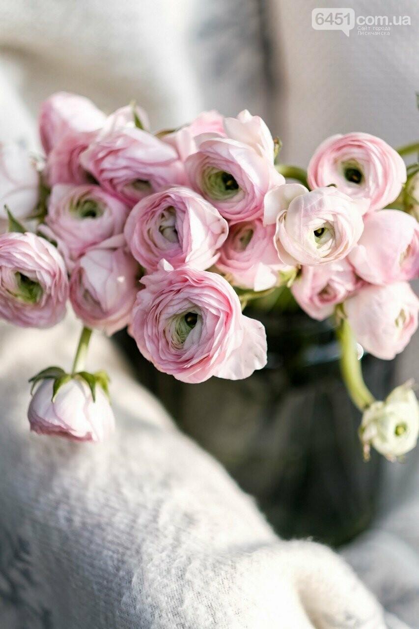 Прогноз по ценам на цветы: какая стоимость цветов в Лисичанске в преддверии праздника, фото-6