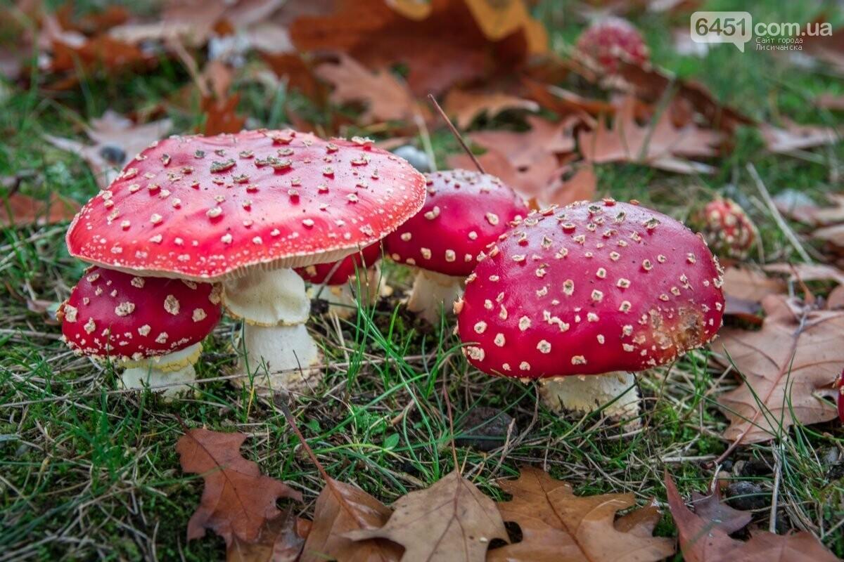 Грибной сезон на Луганщине открыт: как лисичанам не отравиться грибами?, фото-3
