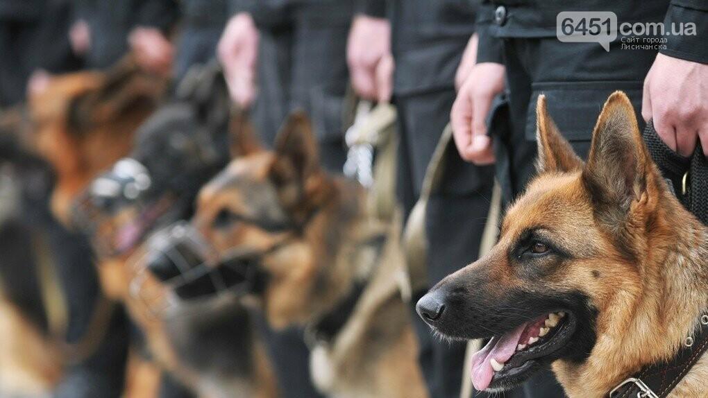 На Луганщине после карантина служебные собаки вернулись в кинологический центр, фото-1