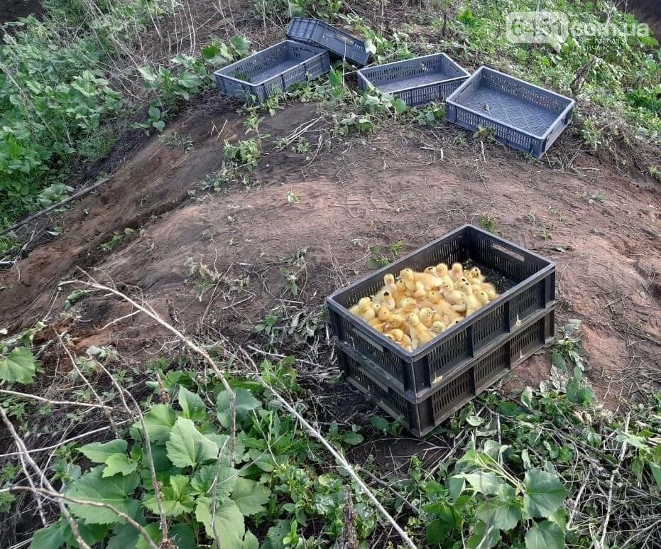 Из-за действий контрабандистов в Луганской области погибло 400 утят, фото-1