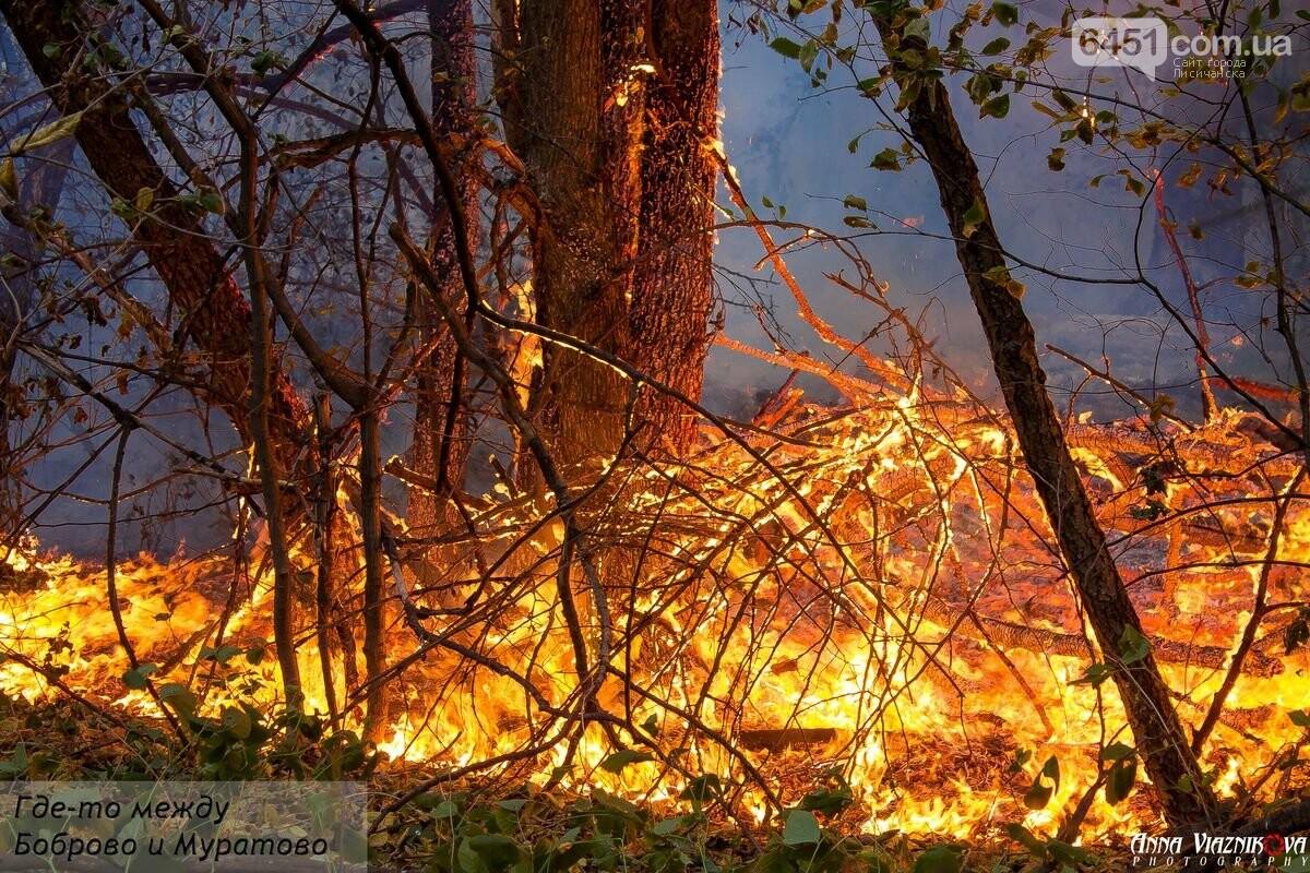 Последствия пожаров в Муратово и Сиротино, фото-2