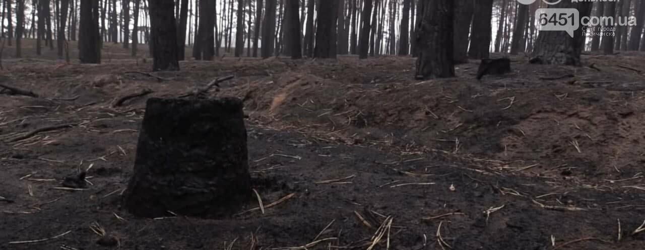 На восстановление после масштабных пожаров на Луганщине потребуются года и миллиарды гривен, фото-2