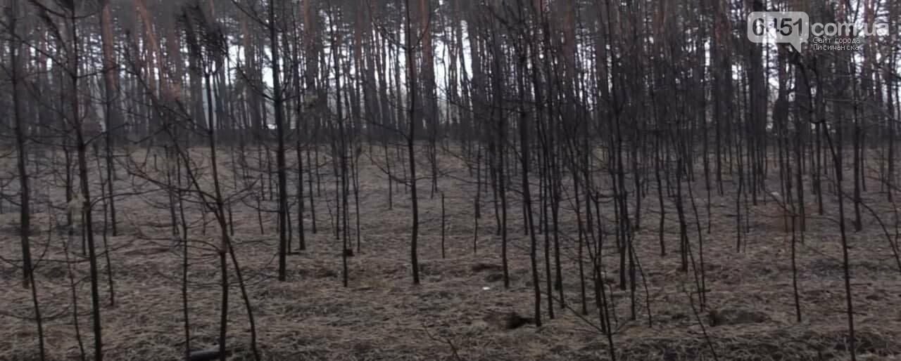 На восстановление после масштабных пожаров на Луганщине потребуются года и миллиарды гривен, фото-3