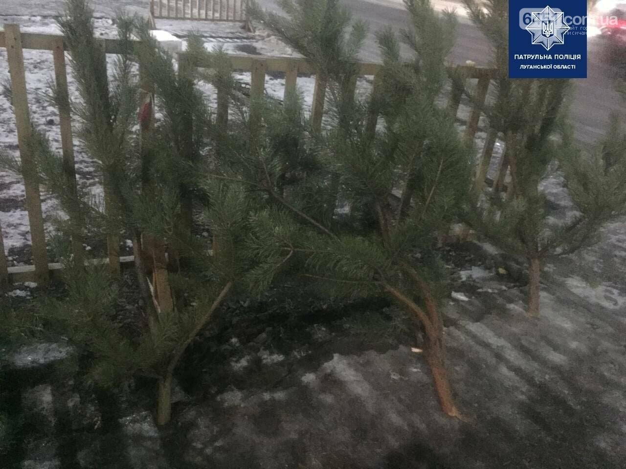 В Северодонецке мужчина незаконно продавал ёлки, фото-2