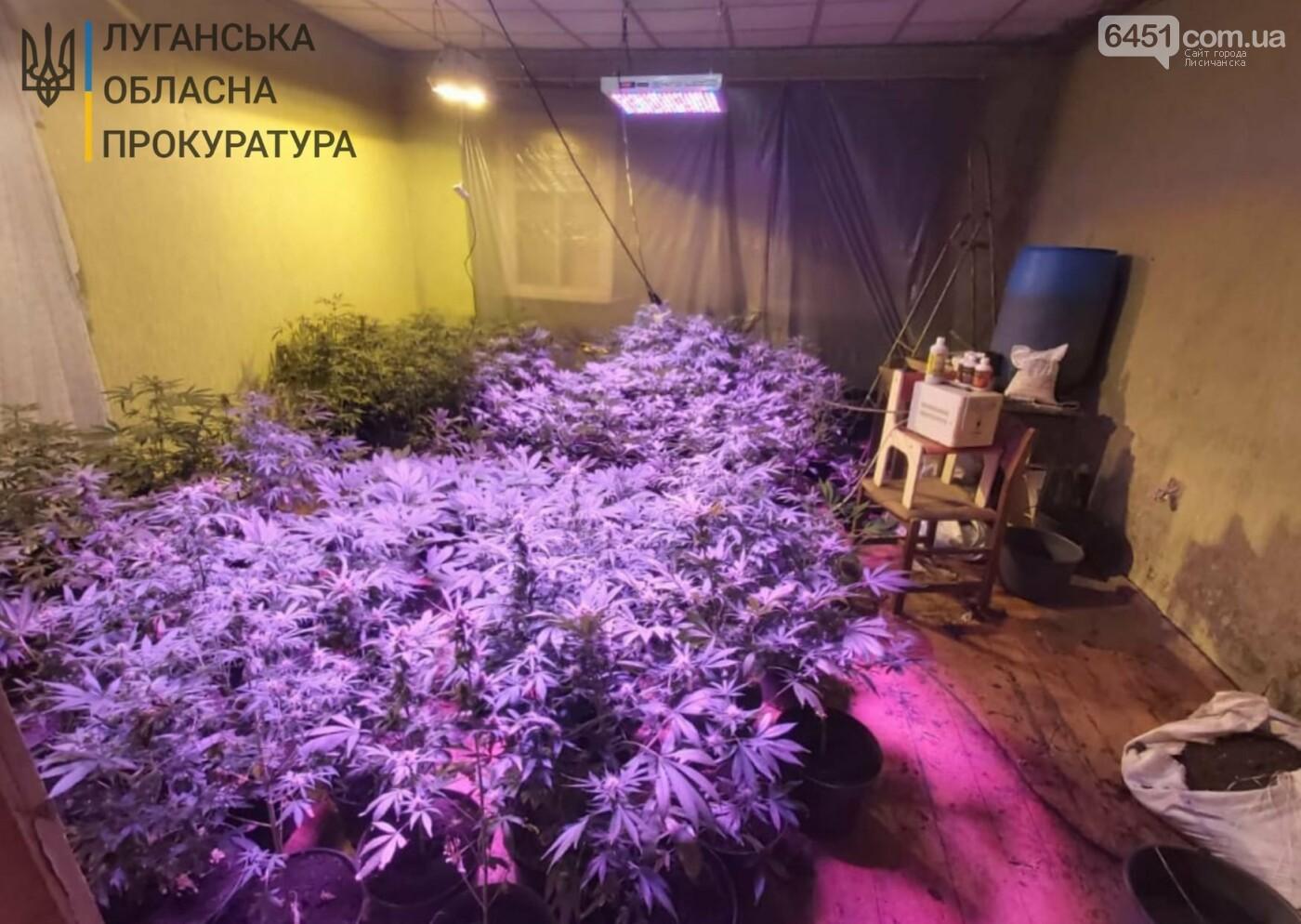 В Кременной разоблачили преступную группу, которая выращивала коноплю, фото-1, Луганская областная прокуратура