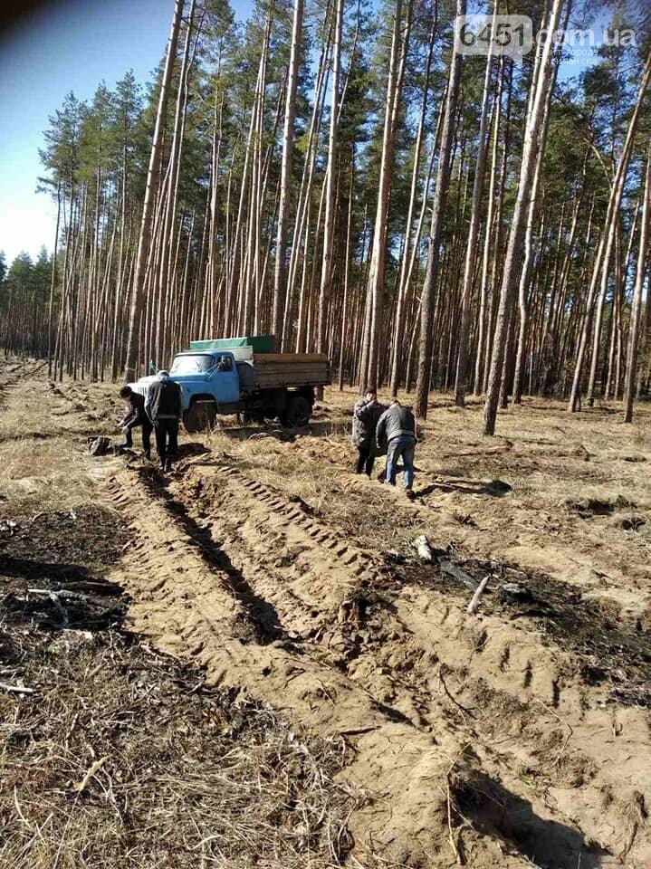 В Новоайдарском лесничестве высадят 450 сосен, фото-4
