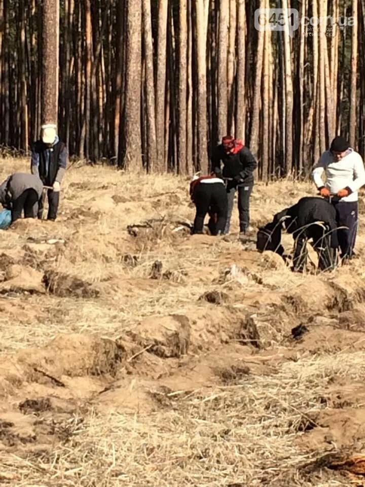В Новоайдарском лесничестве высадят 450 сосен, фото-5