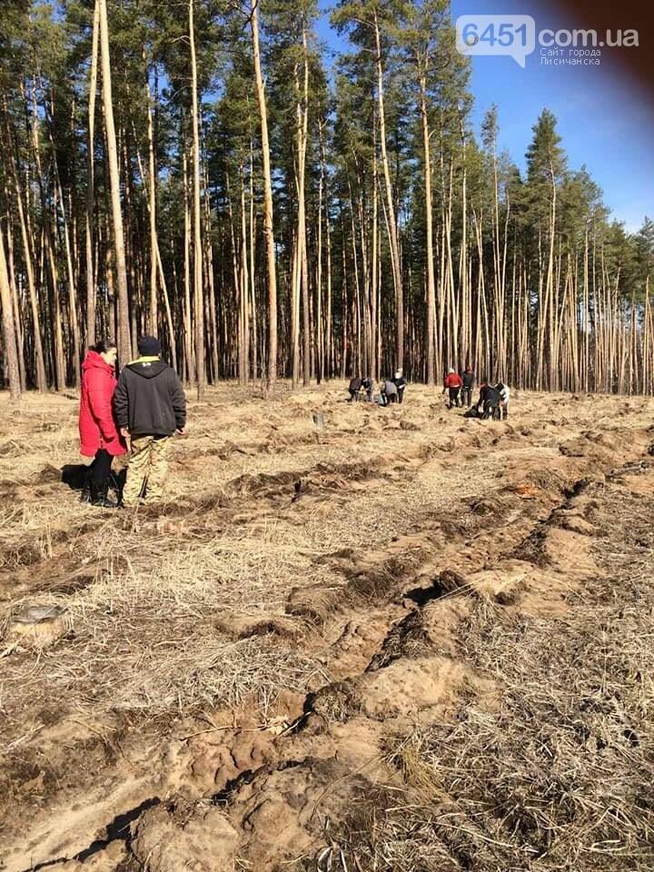 В Новоайдарском лесничестве высадят 450 сосен, фото-6