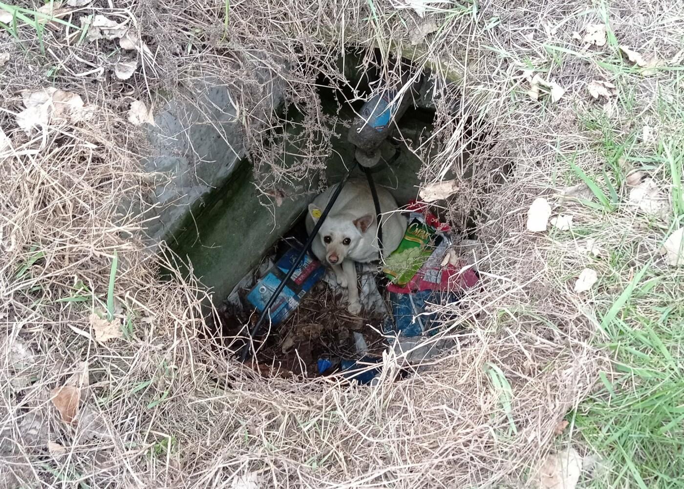 В Лисичанске спасатели помогли четырёхлапым, попавшим в беду, фото-2